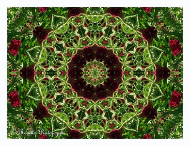 One of our mandalas open editions prints available via our Fine Art America store.